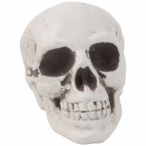 Skull Head (Set of 2)